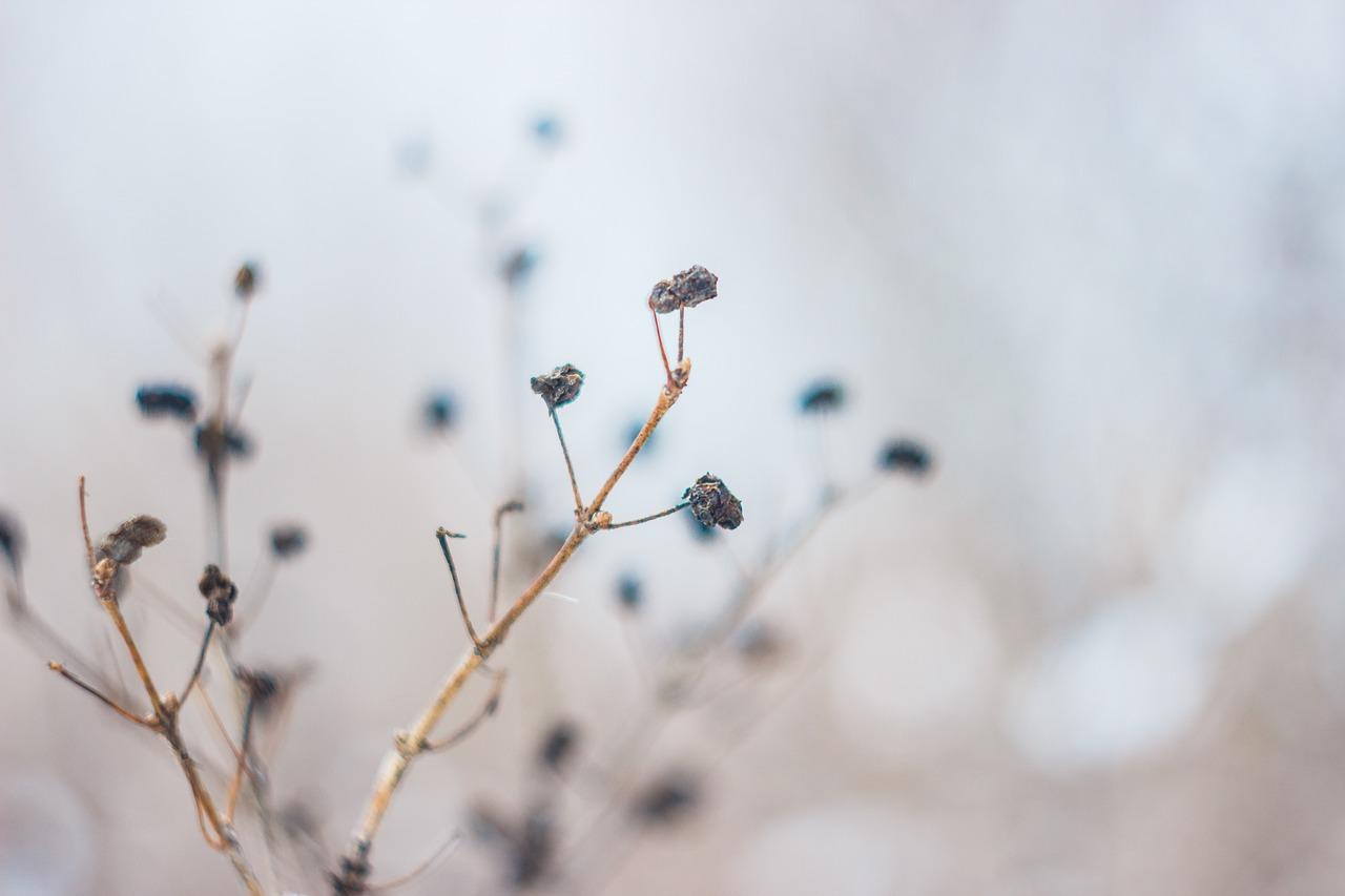 flower-2573590_1280